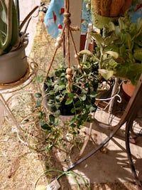Hanging planter with succulent Hemet