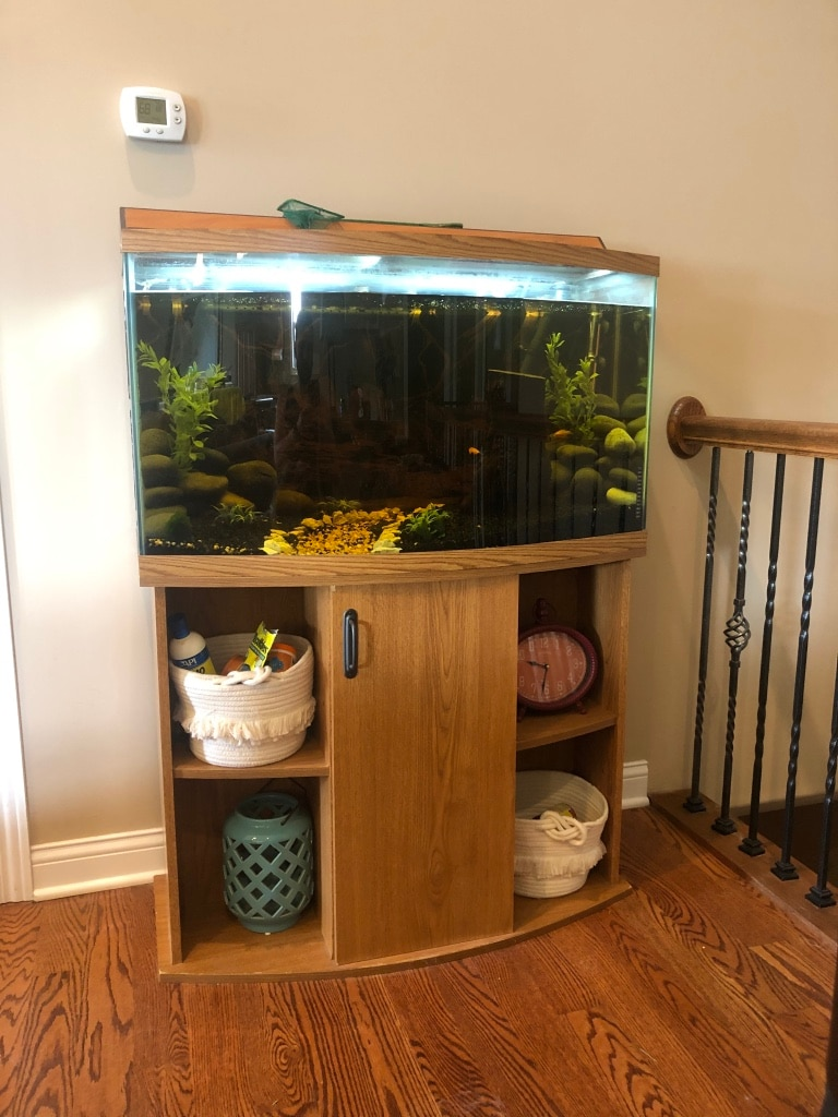 Photo Large bow front fish tank