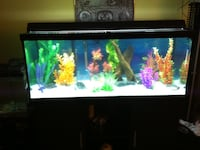 Fish tank and stand New Tecumseth, L0G 1A0