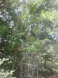 pear trees 20 feet tall producing pears already Pineville, 71360