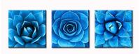 Brand New In Box Close-up of Succulent Plants- 3 Panel Canvas Wall Art Decor- Modern Simple Life Blue Teal Agave Plant Leaves Wall Decoration for Living Room- Ready to Hang 16x16inchx3 Hayward, 94544