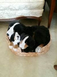 white, black, and brown dog plush toys