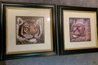 Tiger and lion picture ser