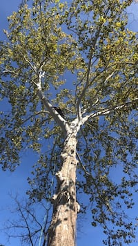 Fully Insured - Free Bids - 16+ years experience (Cut N Run Tree Services)