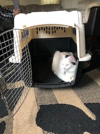 White and black pet carrier Oshawa, L1G 3R3