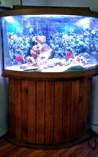55 gallon bowed corner fish tank and accessories Mount Airy, 21771