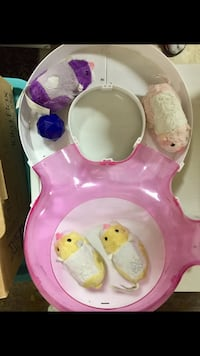 Zhu Zhu pets and accessory  Mississauga, L5L 3Y3