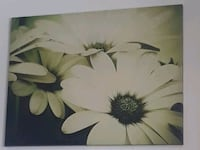 greyscale photography of daisies 1962 km