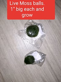 New SEALED - Live Moss balls for fish tank Manchester
