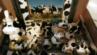 Box of collectible Cows