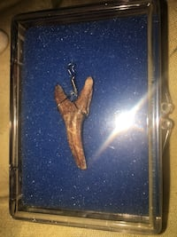 Beautiful Genuine Vtg Shark Tooth fossil Pendant Necklace Charm Collectors Piece in Case!