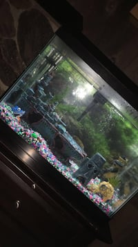 30 gallon fish tank Barrie, L4M 2R9