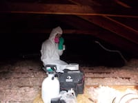 Discount Mold Removal Services Brantford