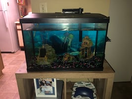 20 gallon fish tank with decorations