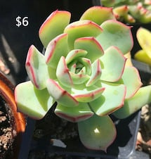 Beautiful Succulent plants for sale price start from $6