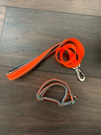 Orange  leash with colour Oakville, L6K 1N3