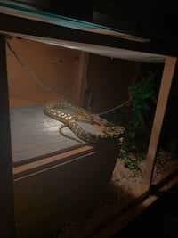 Exotic Pet sitting Maple Ridge