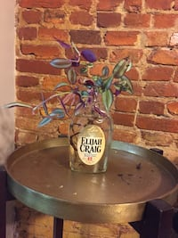 Elijah Craig plant decor (live) Washington