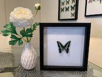 Real Butterfly Home Decor