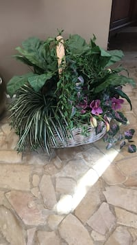 lobe-shape and spider plant with wicker basket