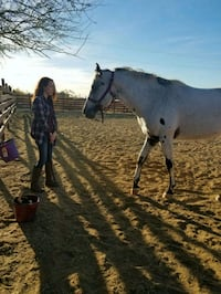 Horse Boarding Available Queen Creek, 85142