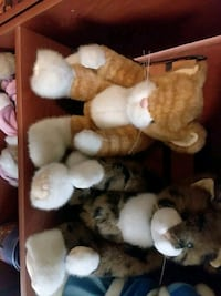 Set of collectable plush cats.