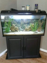 FISH TANK AND EVERYTHING Simcoe