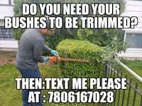 Bushes trimming or yard clean up Edmonton, T5M 2P1