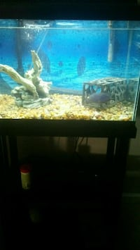 Fish tank with fish Bakersfield, 93309