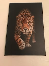 Tiger canvas picture