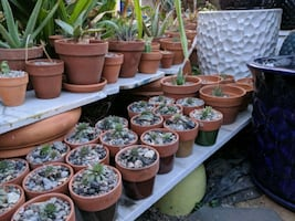 10/19 - Buys Plant, Buy a Pot - Free Terracotta with Purchase