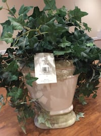 Green leaf plant in white ceramic pot Kensington, 20895