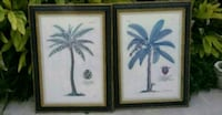 two black wooden framed painting of white flowers Alamo, 78516