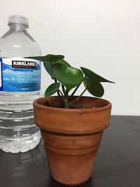 Health green plant indoor