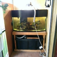 72 gal bow front .saltwater with fish custom wet d Fort Lauderdale, 33311