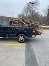 junk removal tree removal Towson