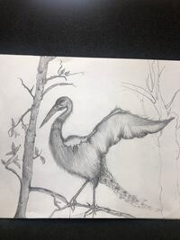 Drawing of Bird