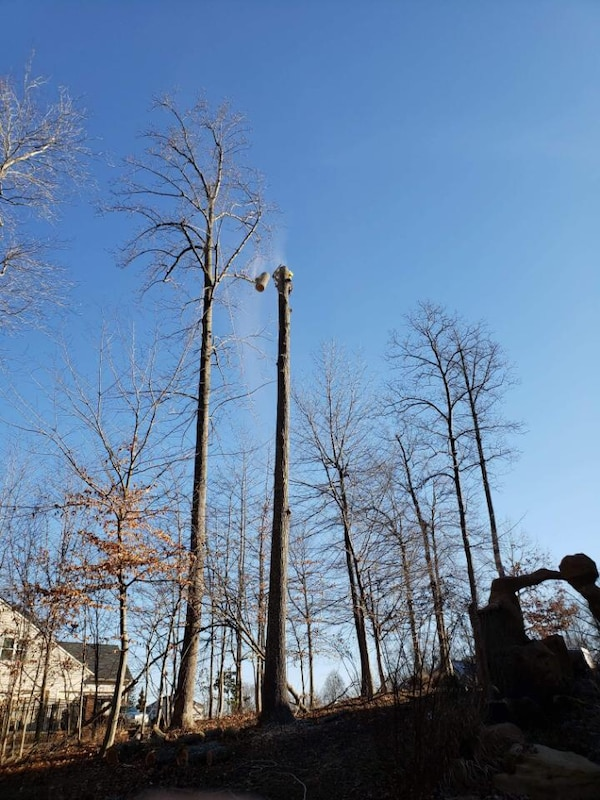 Tree cutting 492cb7d9-d2d2-4809-8740-01168835fec2