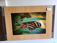 Longwing butterfly painting