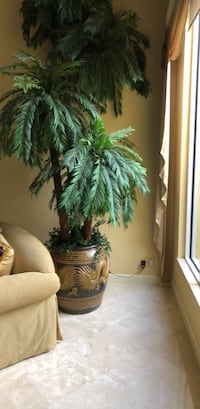 green and brown potted plant Delray Beach, 33446