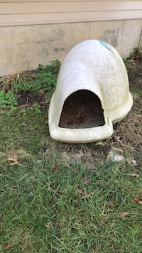 white and brown cat condo Lexington, 40509