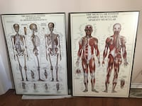 Skeletal  and muscular system Edmonton, T6G