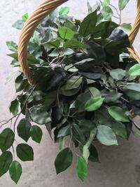 green leaf plant with brown pot Fresno, 93722