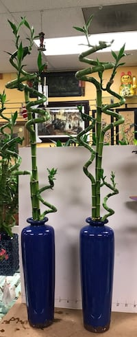 About 4' tall bamboo in beautiful blue vase for prosperity $35/each. Only one left Reno, 89502