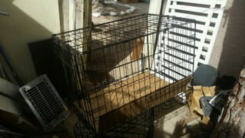 large cage for large dog or animal
