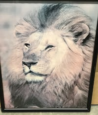 Lion picture frame  New Carrollton, 20784