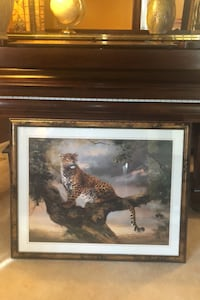 Cheetah Picture Catonsville, 21228