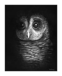 Barred Owl charcoal drawing  Beaumont, T4X 1C6