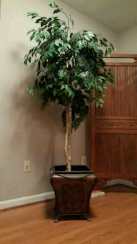 SILK FICUS TREE, expensive pot included Herndon, 20171