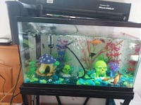 Fish tank and complete set up